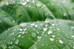 Wet leaf Royalty Free Stock Photo