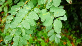 Wet leaf Royalty Free Stock Photography