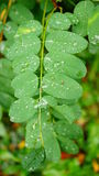 Wet leaf Stock Photography