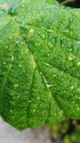 Wet leaf Stock Images