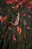 Wet leaf. Red leaf lying wet stone sun shine Stock Photo