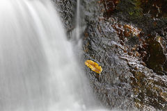 Wet leaf on rock. A lone yellow leaf is stuck to the wet rock by falling water Royalty Free Stock Photo