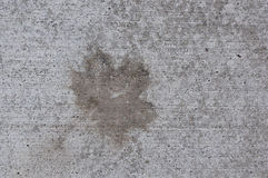 Wet Leaf Stain on Concrete Stock Images