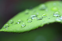 Wet leaf. Water drops macro view on the green leaf Stock Photos