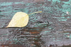 Wet leaf on wood. The fallen leaf poplar on a wet wooden bench Royalty Free Stock Photography