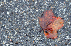 Wet leave Royalty Free Stock Photography