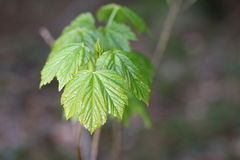 Wet Leave Royalty Free Stock Photos