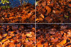 Wet Leaves in Autumn on the Ground Stock Photography