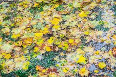 Wet leaves on ground. Autumn theme in northern Italy Stock Image