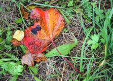 Wet leaves Stock Image