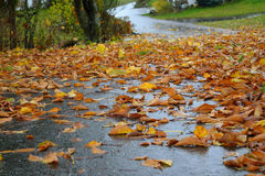 Wet leaves on the road Royalty Free Stock Photos