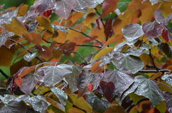 Wet Leaves Royalty Free Stock Photo