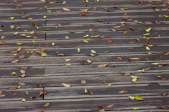 Wet leaves on vintage wooden bridge surface Royalty Free Stock Photography