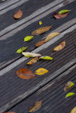 Wet leaves on vintage wooden bridge surface Stock Images