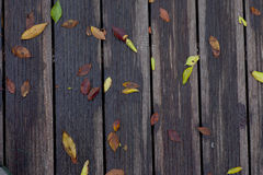 Wet leaves on vintage wooden bridge surface Stock Photo