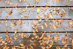 Wet leaves on wood deck stock images
