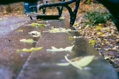 Wet leaves on a wooden bench Royalty Free Stock Image