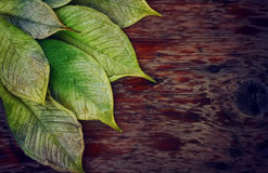 Wet leaves on a wooden table Stock Image