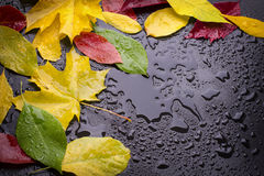 Wet leaves Royalty Free Stock Photos