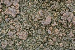 Wet lichen on floor. Stock Images