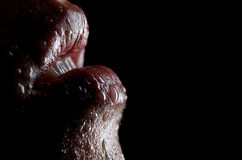 Wet Lips Royalty Free Stock Image