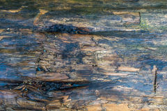 Wet Log Closeup royalty free stock photos