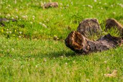Wet Log in the Grass royalty free stock photos