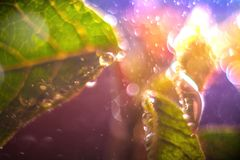 Fresh leaves with big drops. Abstract bokeh background. Macro scenery stock image