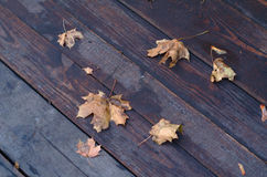 Wet maple autumn leaves. On wooden background Royalty Free Stock Photography
