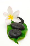 Wet massage stones. Wet zen stones and frangipani flower on a leaf Stock Photos