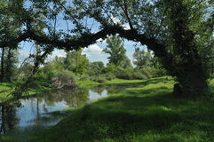 Wet meadow and riparian forest oxbow lake. Vistula Valley. Spring Royalty Free Stock Photography