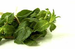 Wet mint Stock Photo