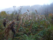 Wet and misty autumn morning with water drops on grass Royalty Free Stock Photography