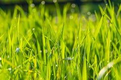 Wet morning grass background Stock Photos