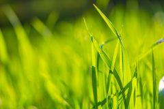 Wet morning grass background Stock Photography