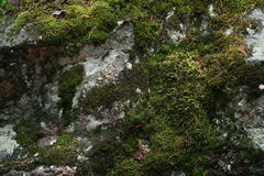 Wet moss on the rock surface Royalty Free Stock Photos