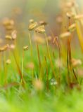 Wet moss Royalty Free Stock Photo