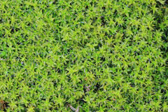 Wet moss texture Stock Images