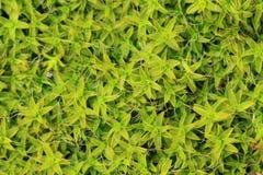 Wet moss texture Stock Photo