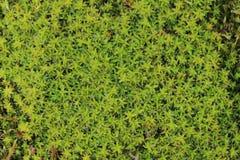 Wet moss texture Stock Photos