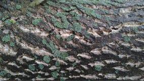 Wet mossy bark Royalty Free Stock Photos