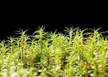 Wet mossy marsh Stock Photo