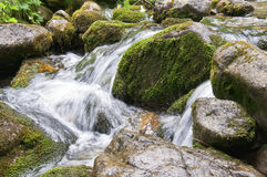 Wet mossy rocks in the creek Royalty Free Stock Photography