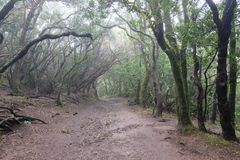 Wet and muddy forest in Anaga, Tenerife SPAIN stock photos