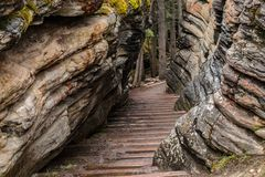 Wet muddy stairs down through a crevice. Wet muddy stairs going down through a crevice. Moss growing on the side of the rocks. Trees at the bottom of the stairs Stock Image