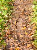 Wet and muddy walkway path trek on floor with green grass and fa. Llen autumn leaves; essex; england; uk Stock Image