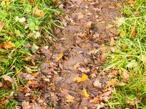 Wet and muddy walkway path trek on floor with green grass and fa. Llen autumn leaves; essex; england; uk Royalty Free Stock Photos