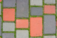 Wet, multicolored paving slab and green moss.  stock images