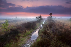 Wet narrow path in fog. Over swamps, Drenthe, Netherlands Royalty Free Stock Photos