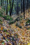 Wet narrow path in late autumn. Colourful and vibrant foliage on royalty free stock image